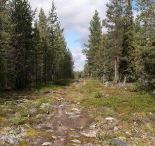 Rovaniemi Pohtimolampi maastopyöräily